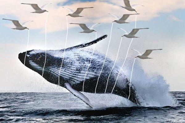 fail-whale-real-life